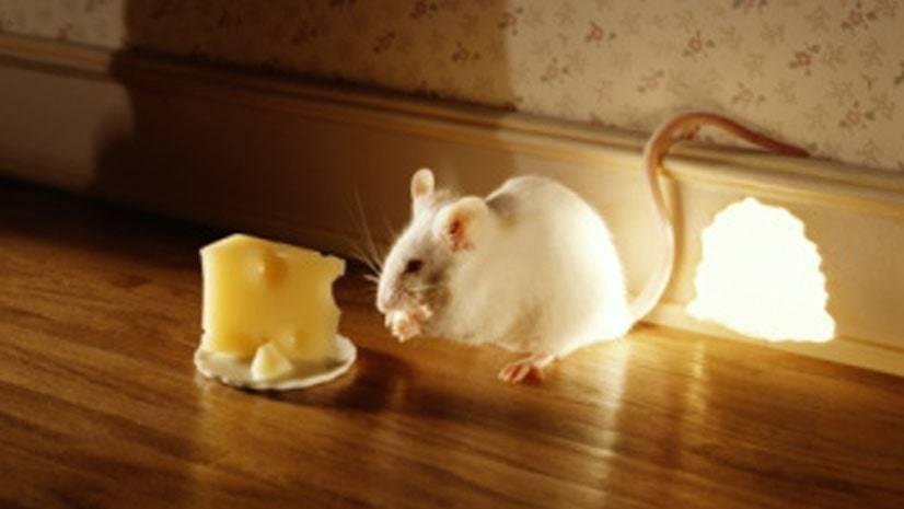 Sombras do gato e do rato