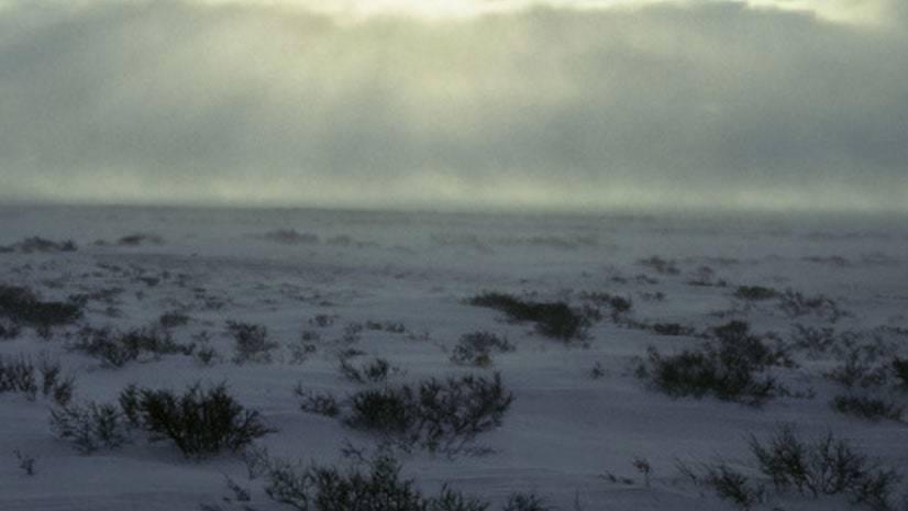 O ambiente da tundra ártica
