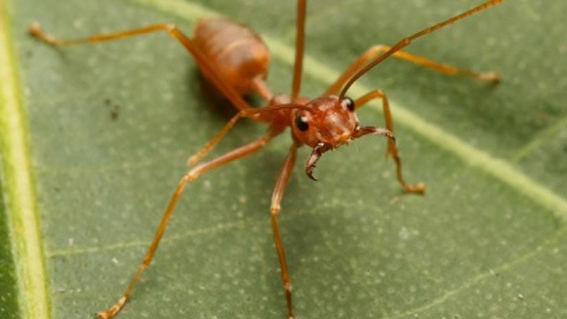 Guerreiros invertebrados