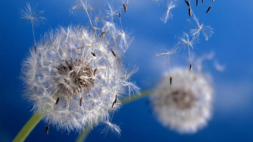 De onde vem o vento?