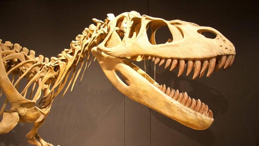 O que extinguiu os dinossauros?